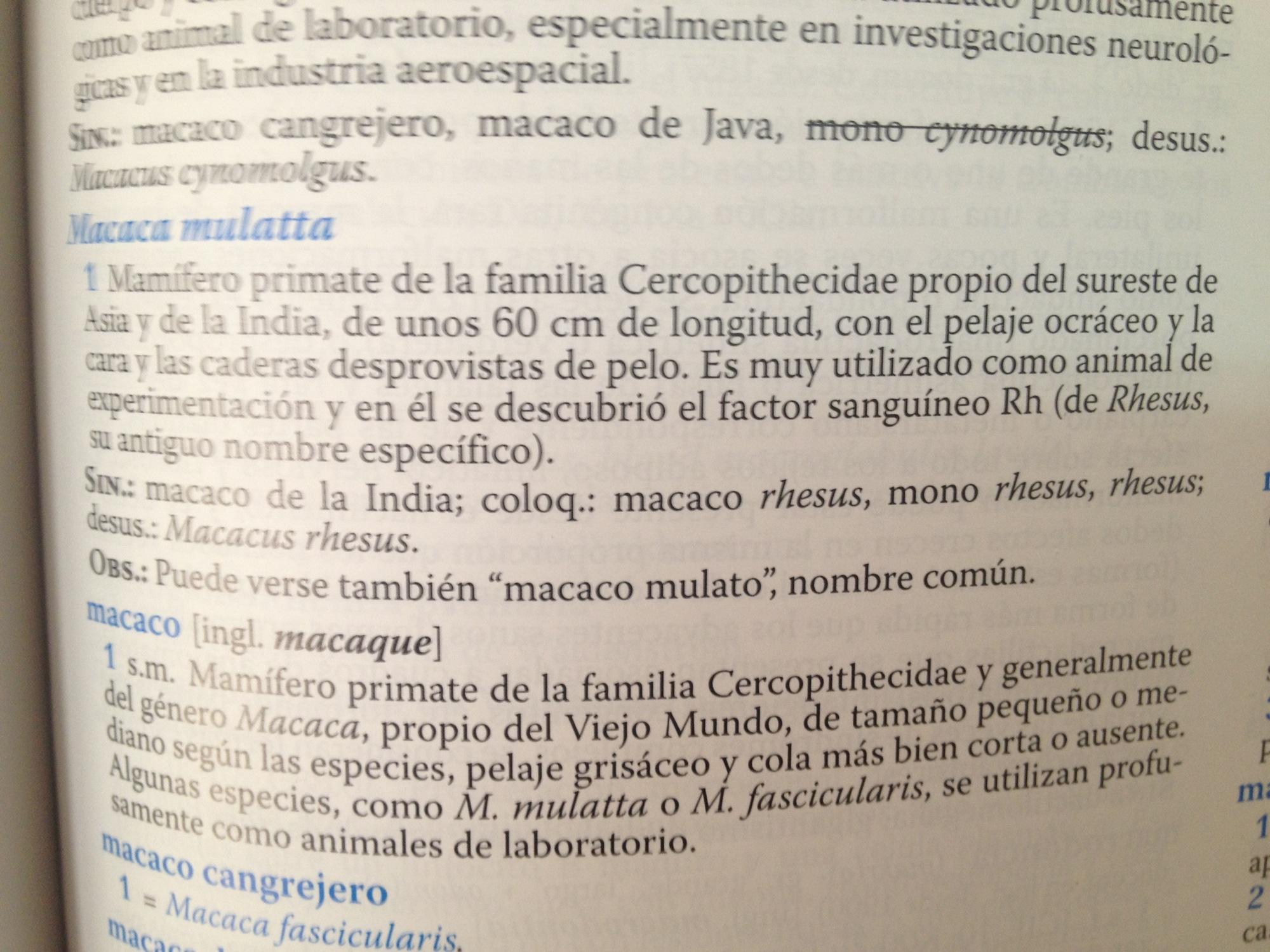 Diccionario de Términos Médicos, entrada «macaca mulatta».